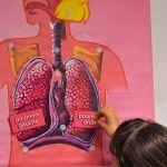 Appareil respiratoire - 4